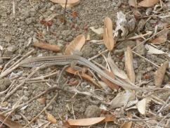 54. Reptile