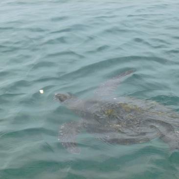 55. Suite du programme - Nager avec les tortues géantes d'Equateur !