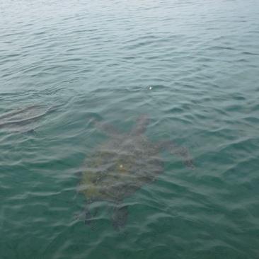 56. Un moment magique passé sous l'eau avec ces créatures
