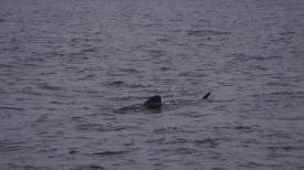 60. Baleine !2