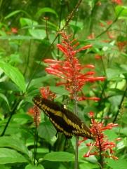10. Mariposa2