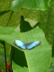 11. Mariposa3