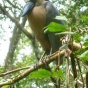 13. Le premier oiseau d'une magnifique série que nous verrons ce jour