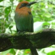 16. Oiseau