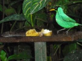 18. Oiseau2