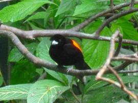 21. Oiseau4