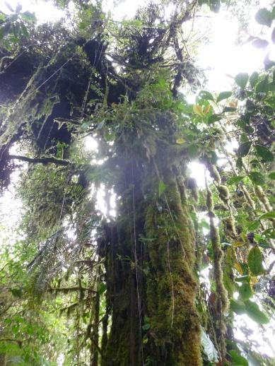 32. Reserva Santa Elena