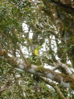 45. Pendant que l'on attend notre tour sur une passerelle, un toucan fait son apparition...
