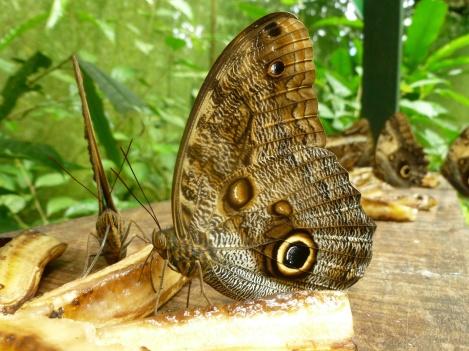 8. Immense papillon