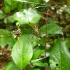 Costa Rica - Parc Cahuita - Araignée