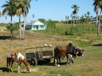 Cuba - Sur la route de Vinales