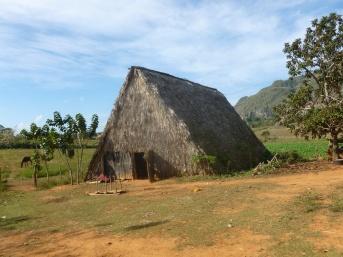 Cuba - Vinales - Maison de séchage des feuilles de tabac