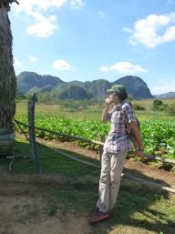 Cuba - Vinales - Cigare dans champs de tabac
