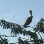 9. On peut observer les oiseaux marins depuis notre balcon
